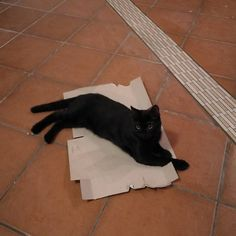 How to catch a cat. Lesson 1. #blackcat #catchacat