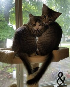 Modern Cat's Photo Contest - Charlie and Lucy