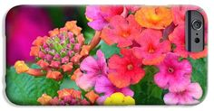 Lantana iPhone 6 Case ~ brilliantly colored umbrels of a lantana plant blooming in Salt Lake City, Utah. The lantana flower becomes more colorful as it ages.  Available on iPhone 6/6Plus/5/5s cases and Samsung Galaxy S4/S5/S6 cases. www.ronablack.com