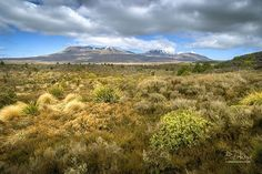 """Tongariro National Park New Zealand. Tongariro is New Zealand's oldest national park and a dual World Heritage area. This status recognises the park's important Maori cultural and spiritual associations as well as its outstanding volcanic features. The park has 3 active volcanoes - MtTongariro Mt Ngauruhoe (Mount Doom in """"The Lord of the Rings"""" films) and Mt Ruapehu."""