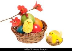Royalty free stock photography at Alamy: Easter basket with colored eggs, chickens and flowers isolated on white background.