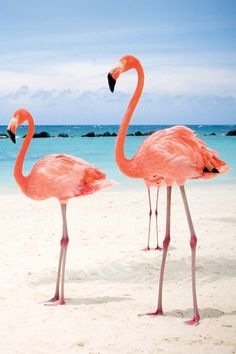 Flamingoes on the Beach