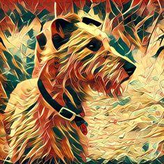 Irish Terriers Rock Animals And Pets, Cute Animals, Scottish Deerhound, Irish Terrier, Irish Wolfhound, Irish Setter, Amazing Dogs, Dog Paintings, Family Dogs