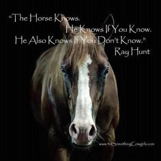 equestrian quotes | Horse pictures with quotes horse quotes - Words On Images: Largest ...