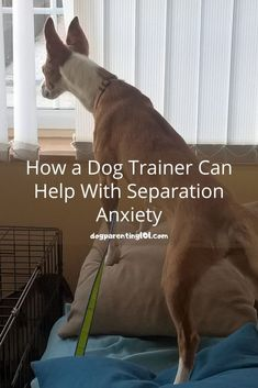 What can be more heartbreaking then hearing your dog bark and cry when left alone? How about seeing the destruction that anxiety has caused? Here are ways you can help. #separationanxiety #stressedoutdog #anxietyindogs Dog Separation Anxiety, Dog Anxiety, Pet Sitters International, Facebook Dog, Dog Health Tips, Left Alone, Dog Barking, Parenting 101, Old Dogs