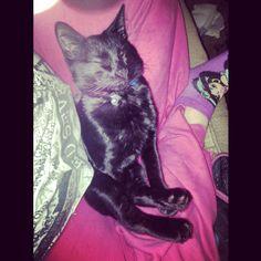 Cuddled in my lap :)  #black #cat # kitten #kitty #babyboy #blackcat #blackkitty #blackkitten #yelloweyes