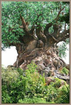 Was für ein Baum .Wahnsinn was die Natur zaubert