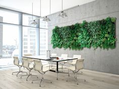 Bring a burst of nature straight into your premises with a stunning indoor living wall. Our living walls allow you to introduce colour and texture into the office all year around. Pilea Microphylla, Modern Canvas Art, Modern Wall Art, Feng Shui, Planting Bulbs In Spring, Garden Solutions, Long Walls, Landscape Walls, Pergola Designs