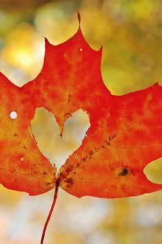 although it means we are closer to winter, there are things that I do like about fall...