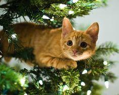 xmas kitty