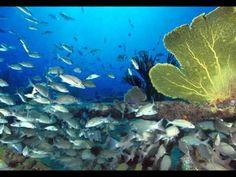 10 kleine visjes - YouTube