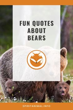 For the bear lover. Check out these inspirational quotes about bears. Click through now. #spiritanimals #animaltotems Find Your Spirit Animal, Bear Spirit Animal, Famous Quotes, Best Quotes, Symbols Of Freedom, You Stupid, Animal Totems, Everyone Knows, Bears