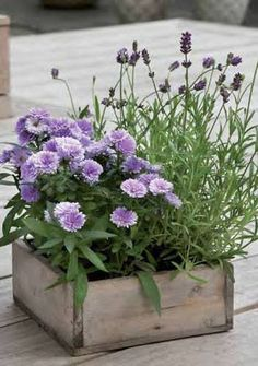 Garden Flower Garden box with Lavender!Flower Garden box with Lavender! Container Flowers, Container Plants, Container Gardening, Flower Planters, Dream Garden, Garden Art, Garden Design, Herb Garden, Purple Flowers