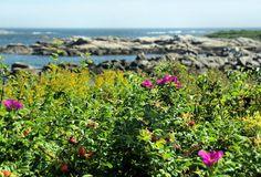 Biddeford Pool trails in Maine - Pure Wander Magazine
