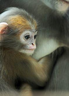 ** Monkey
