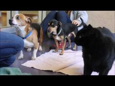 Dogs and cat left at shelter looking for a home together