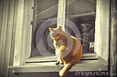 Photo about ginger cat sitting on window. Image of window, fine, unusual - 88597238 Ginger Cats, Cat Sitting, Sunnies, Lion Sculpture, Statue, Stock Photos, Image, Art, Art Background