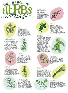 Basics on Herbs