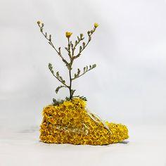 Mr PLANT © 2014 / Just Grow it !