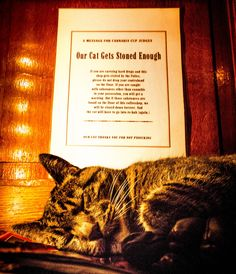 """Our Cat Gets Stoned Enough"", A polite request to all patrons of the 420 Cafe in Amsterdam. - Imgur"