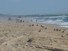Newport Beach Pier | WizardofBaum: NEWPORT BEACH PIER PORTRAITS