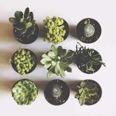 Znalezione obrazy dla zapytania kaktusy tumblr