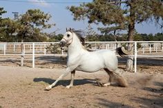 Learn what predisposes certain horses to separation anxiety and what we can do…