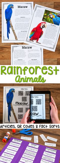 Rainforest Animals: Informational Article, QR Code Research Page & Fact Sort is a set of 12 informational articles all about Rainforest Animals. These articles are full of interesting facts and details that students can use during reading and writing activities.  Includes an article about each animal in two formats (two-page color photos & one-page text), QR Codes for online articles and videos about the animal and a fact sort sheet where students can sort facts about each animal's…