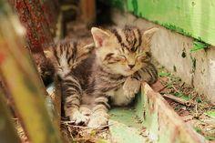 Una buena siesta :)  ZzzZZzzz...  #animales