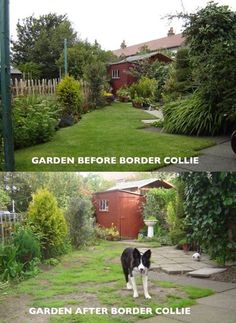 Border collies collie and anatomy on pinterest