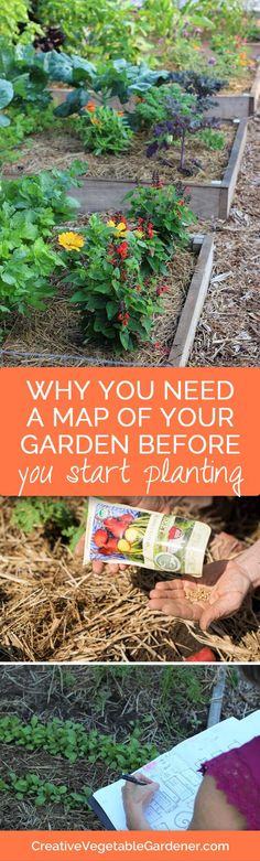 How making a map of your garden will help you be a more successful gardener…