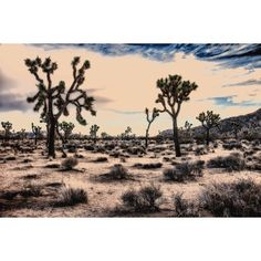 Joshua Tree, Magical Desert Landscapes. Mohave Desert. Southwest... ($25) ❤ liked on Polyvore featuring home, home decor, wall art, colored trees, photography wall art, tree wall art, landscape trees and black and white wall art
