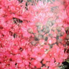 Spiraea ( Douglasii) from Bulbs, Seeds, Garden, Plants, Lightbulbs, Garten, Lawn And Garden, Bulb, Gardens