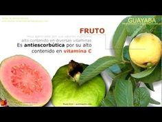 Propiedades medicinales de la guayaba, características de la planta de guayaba, nombre científico, propiedades de la fruta de guayaba, propiedades de las hojas de guayaba.