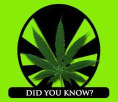 7 Surprising Facts About Marijuana   CannaSOS
