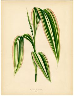 Striped Tropical Leaves Download! - The Graphics Fairy