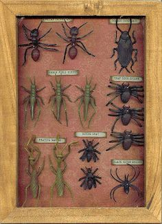 Halloween Decor. Specimen Box Display with Plastic Bugs, label and pin. :: Seeing Things