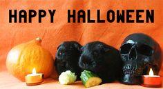 Halloween guinea pig guinea pigs cavy