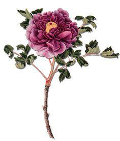vintage flower drawings - Buscar con Google