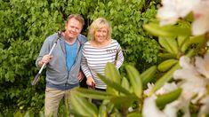 Ti tips til vakre roser Sweet Potato Plant, Purple Sweet Potatoes, Lemon Lime Nandina, Purple Kale, Ornamental Kale, Purple Pixie, Fountain Grass, Fall Containers, Potato Vines