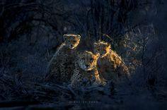 """""""Jacomina & cubs"""" by Marina Cano (https://500px.com/photo/82076559/jacomina-&-cubs-by-marina-cano)"""