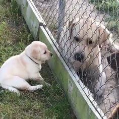 Adorable but sad.I want them to play together. Adorable but sad.I want them to play together. Cute Funny Animals, Cute Baby Animals, Funny Dogs, Animals And Pets, Cute Puppies, Dogs And Puppies, Cute Dogs, Cute Babies, Doggies