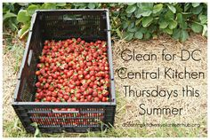 Volunteer to go gleaning with DC Central Kitchen - Thursdays this summer: http://dccentralkitchen.volunteerhub.com/Events/Index
