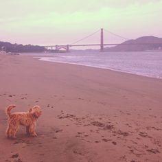 Solitude in San Francisco
