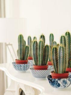 Trouwcactus (Zuilcactus) mooiwatplantendoen.nl   oh le cactus mariage <3