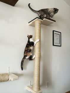 CatastrophiCreations Cat Climbing Vertical Sisal Pole - Wall-mounted, Handcrafted Cat Tree Scratcher - You could find out more details at the link of the image. (This is an affiliate link and I receive a commission for the sales) Sisal, Cat Wall Shelves, Cat Playground, Cat Scratching Post, Cat Climbing, Cat Scratcher, Cat Condo, Cat Room, Cat Accessories
