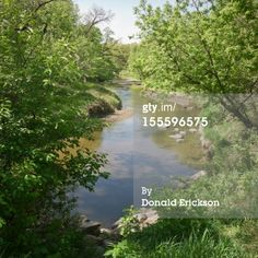 Stock Photo : River in Woods