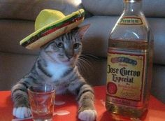 I'll have another shot señor!