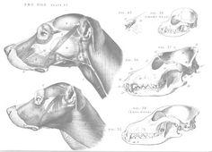Dog anatomy - head - side