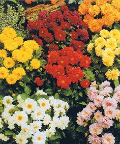 #flores y mas flores Easy, Diy Crafts, Plants, Gardens, Vertical Gardens, Terrace, Spring, Veggie Gardens, Colors